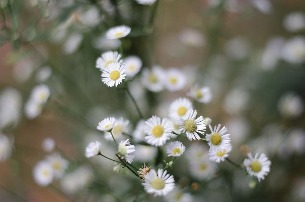 ดอกไม้สวยๆ ที่พบได่ที่แม่กำปอง